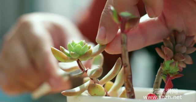 3招解决多肉植物徒长问题,养育又胖又萌的多肉植物