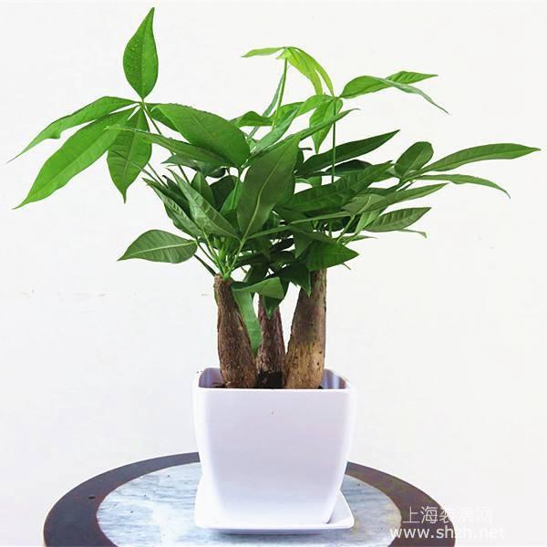 客厅摆放哪些植物比较好,客厅摆放植物有什么风水讲究