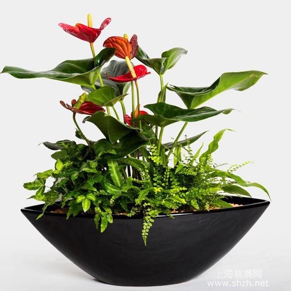 客廳擺放哪些植物比較好,客廳擺放植物有什么風水講究