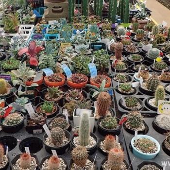 多肉植物全攻略:专家教你怎么选苗、选土、选肥料、选花盆